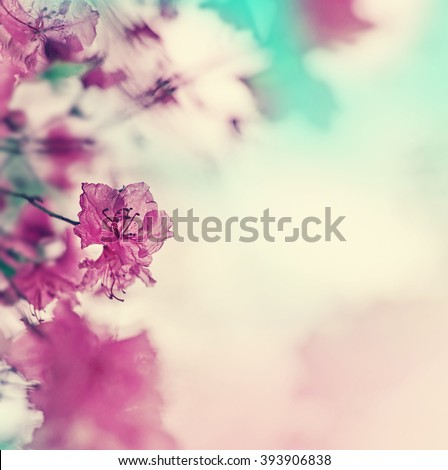Blossom tree over nature background/ Spring flowers/Spring Background/ selective focus - stock photo