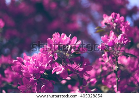 Blossom tree over nature background/ Spring flowers/Spring Background. Spring landscape - stock photo