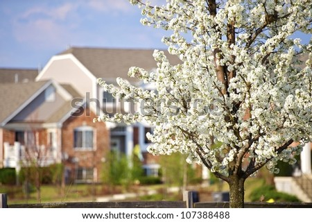 Blossom Trees in the City. Wild American Plum Tree Blossom with Buildings Complex in the Background. Horizontal Photography. - stock photo