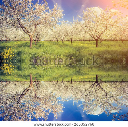 Blossoming apple orchard in spring and blue sky. Ukraine, Europe. Beauty world. Flip canvas vertical. Double exposure effect. - stock photo