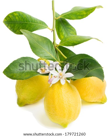 how to set fruit on lemon trees
