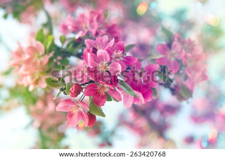 Blossoming cherry tree. Beautiful pink flowers. Selective focus. Retro style toned picture with light leaks - stock photo