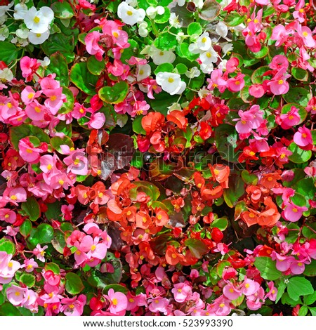 Blossoming flowerbed in the park. Natural flower background.