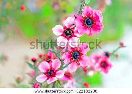 Blossoming flowers in springtime - stock photo