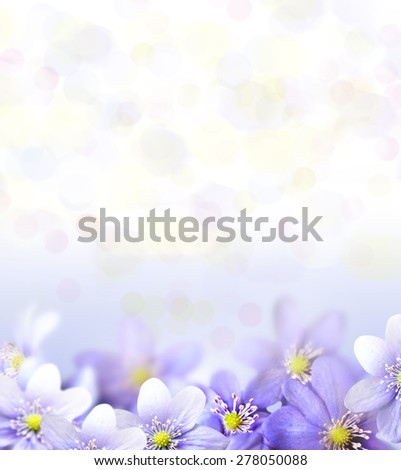 Blossoming flowers snowdrops. Floral background. - stock photo