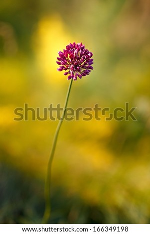 Blossoming garden flowers - stock photo