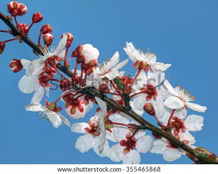 blossoming of the trees - stock photo