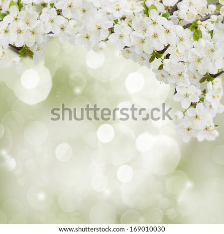Blossoming plum flowers on green garden background