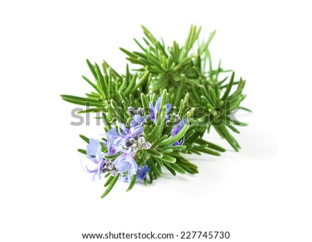 Blossoming rosemary branch isolated on white background - stock photo