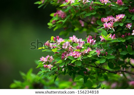 Blossoming shrub with beautiful pink flowers