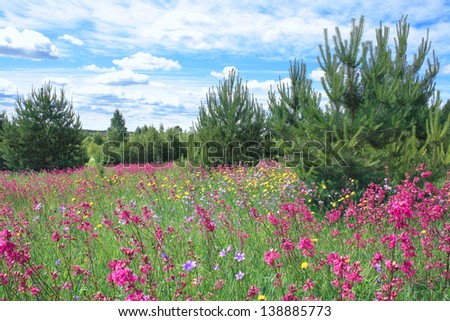 blossoming summer meadow