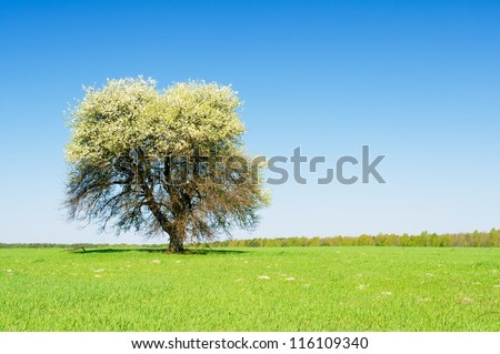Blossoming tree on a turning green meadow - stock photo