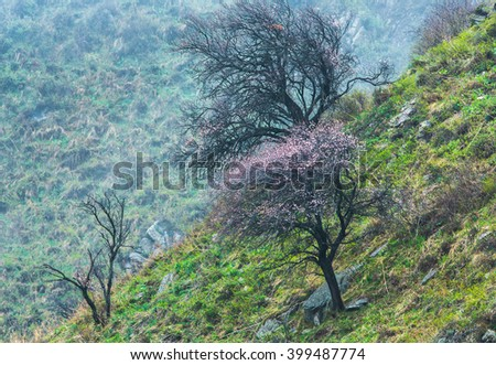 blossoming tree on the hillside