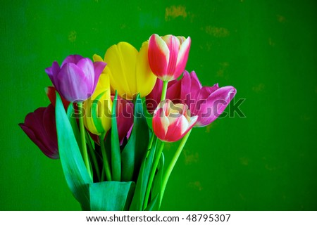 Blossoming tulips in a vase. Colorful flowers - stock photo