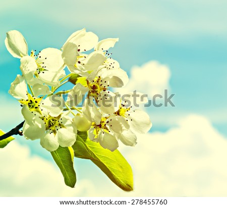 Blossoming white cherry tree. Image was gently toned for inspiration of warm retro style - stock photo