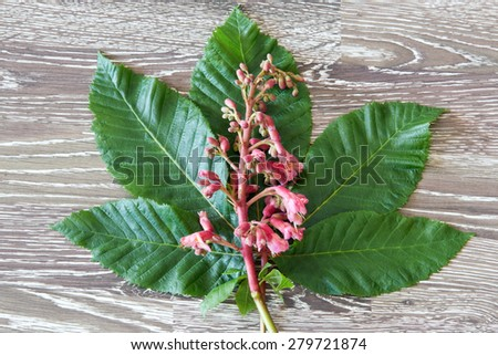 Blossoms of red chestnut on wooden background - stock photo