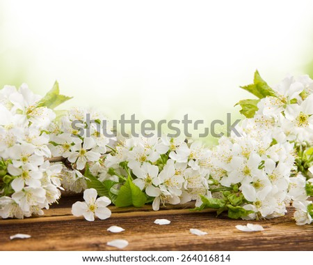 Blossoms on wooden desk with white space for text - stock photo