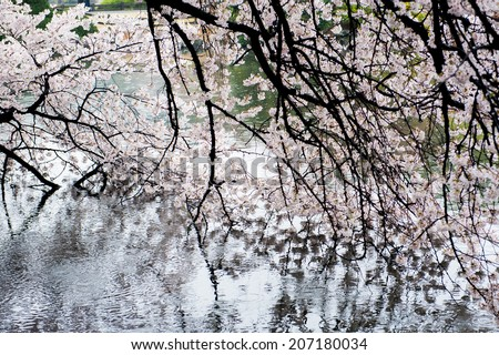 Blossoms reflected at - stock photo