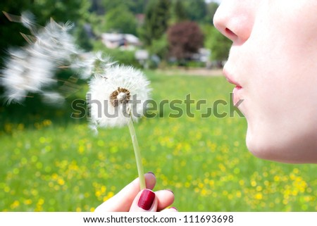 Blowing a dandelion - stock photo