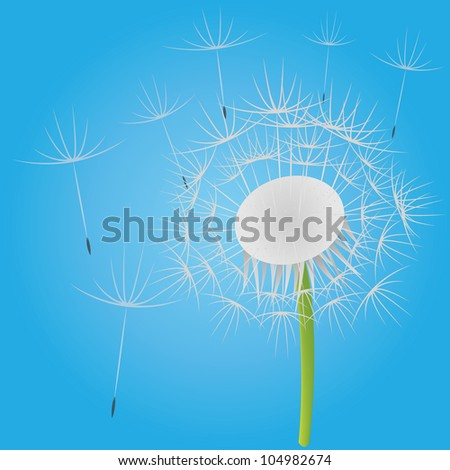 Blowing dandelion on the blue sky - stock photo