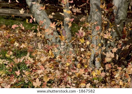 Blowing leaves - stock photo
