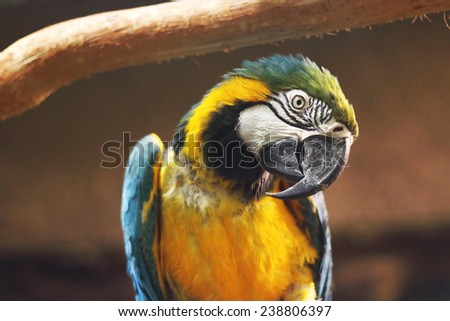 Blu and yellow parrot in cute profile