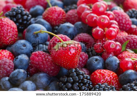 bluberry, raspberry, blackberry and red currrant colorful berries close up - stock photo