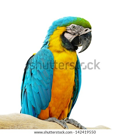 Blue and Gold Macaw aviary, isolated on a white background - stock photo