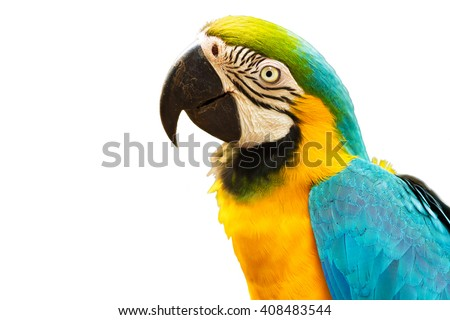Blue and Gold macaw bird isolated on white background. - stock photo