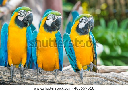 Blue and Gold Macaw in the forest