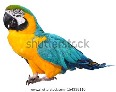 Blue and Gold Macaw isolated on a white background