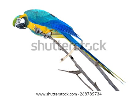 Blue and Gold Macaw isolated on a white background - stock photo