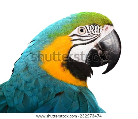 Blue and Gold Macaw isolated on white - stock photo
