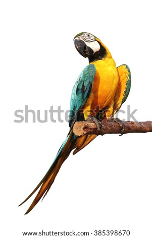 Blue and Gold Macaw isolated on white background - stock photo