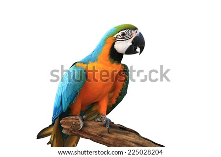 Blue and Gold Macaw,macaw,beautif ul bird, parrot