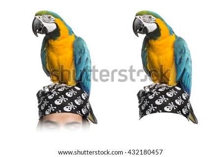 Blue-and-gold Macaw on a pirate bandana, isolated on white