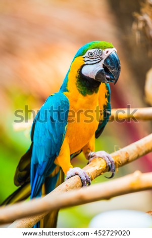 Blue and Gold Macaw on the branch in Thailand - stock photo
