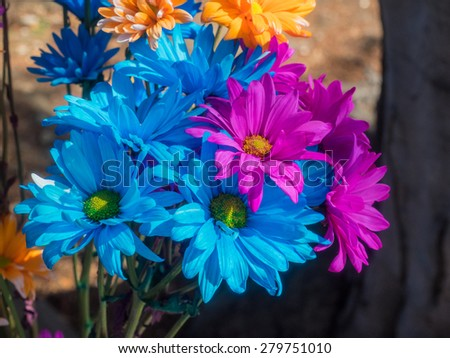 Blue and pink aster flowers in a vase. - stock photo