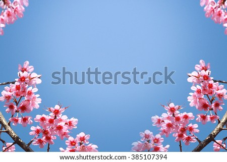 Blue and pink background with cherry blossoms framing the bright vibrant sky with sunshine - stock photo