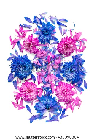 Blue and pink chrysanthemum flowers and petals are in shape of oval.Isolated on white background - stock photo