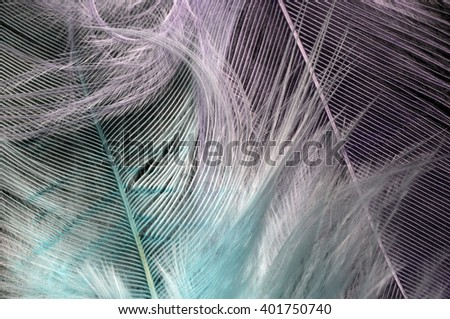 Blue and purple  feathers for background or texture - stock photo
