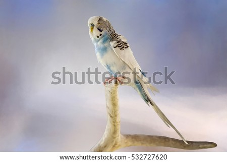 Blue and White Parakeet on Branch Stand
