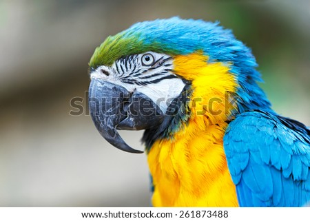 Blue-and yellow ara parrot. - stock photo