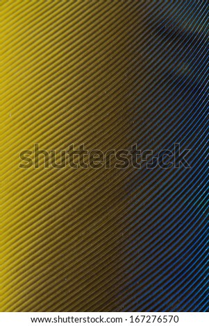 Blue and Yellow Feather detail close up - stock photo