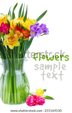 blue and yellow freesia and daffodil  flowers  in glass vase close up isolated on white background - stock photo