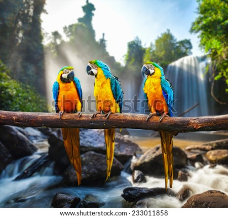 Blue-and-Yellow Macaw (Ara ararauna), also known as the Blue-and-Gold Macaw against tropical waterfall background - stock photo
