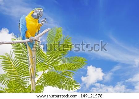 Blue-and-yellow Macaw Ara ararauna on blue sky background - stock photo