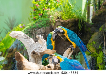 Blue and yellow Macaw bird clings to a tree branch, animal