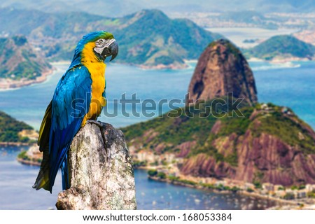 Blue and Yellow Macaw in Rio de Janeiro, Brazil - stock photo
