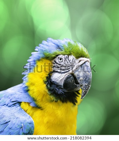 Blue and Yellow Macaw on green background - stock photo